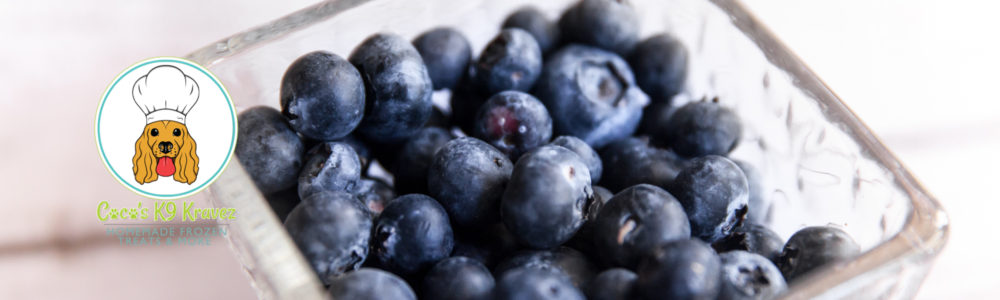 Health benefits of blueberries for your dog